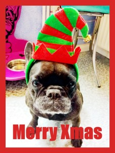 Diva Weihnachtsbully